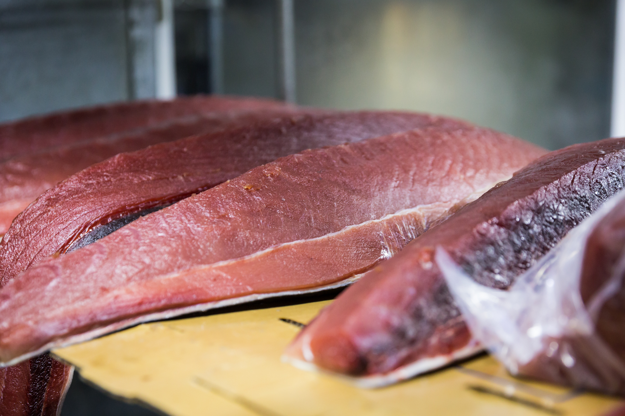 Tuna fish for an article on website photography tips