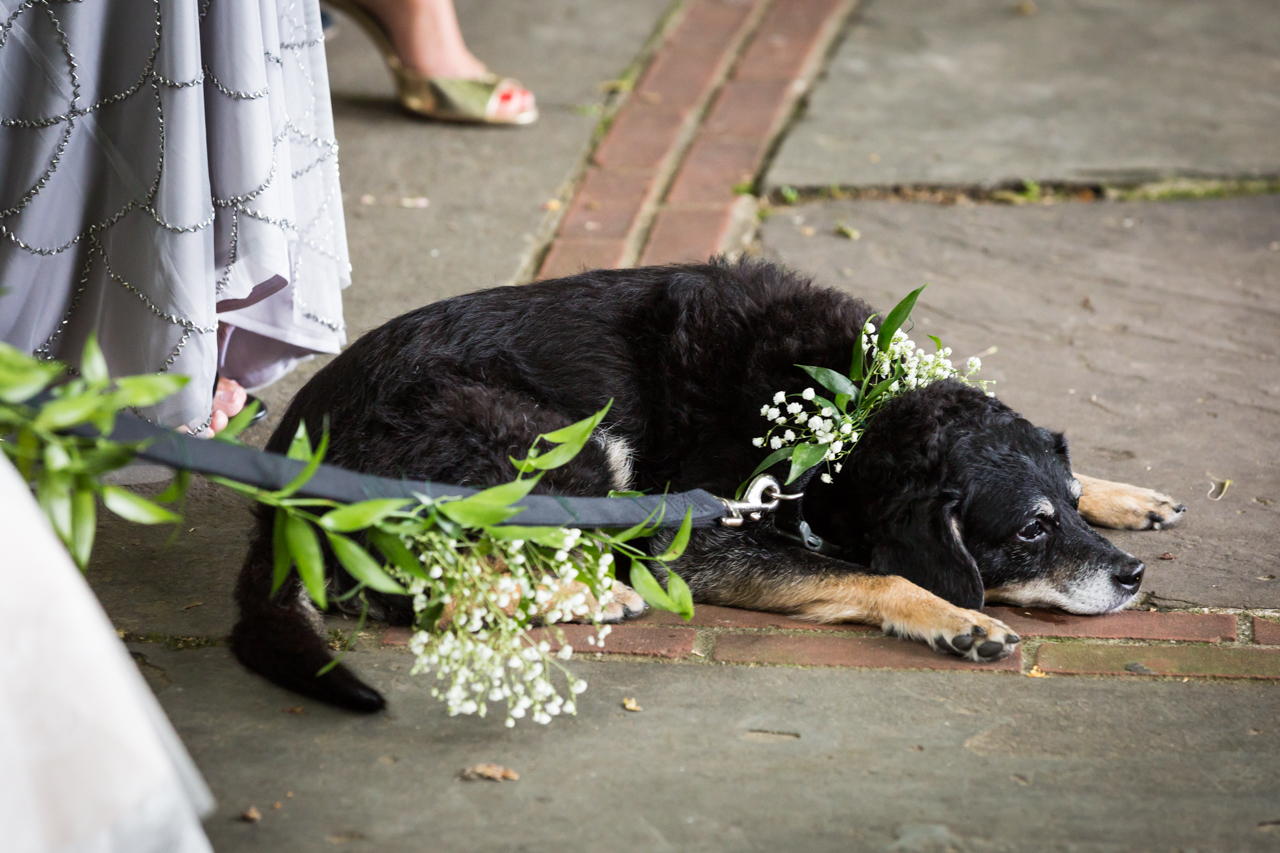 Dog with flowered leash at a Central Park Conservatory Garden wedding