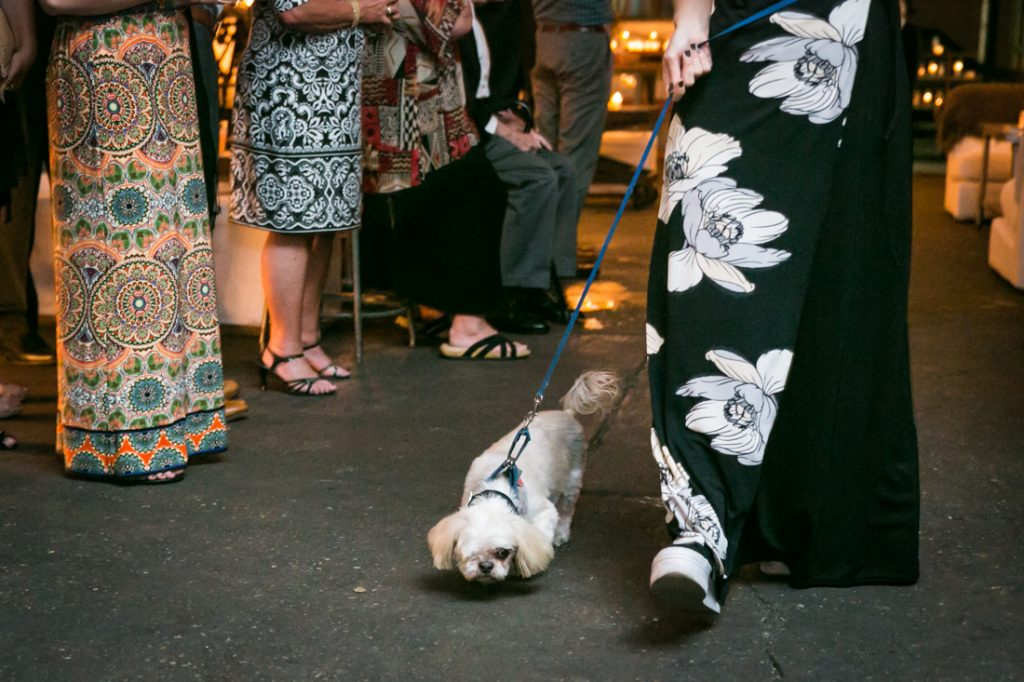 Dog being led down aisle at an Atelier Roquette wedding