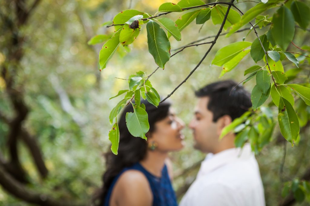 Leaves in foreground and couple out of focus in background