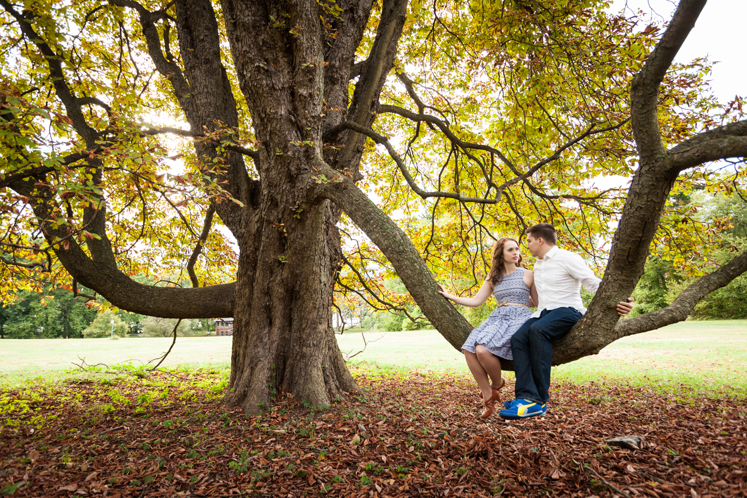 Couple sitting on tree branch at a Lyndhurst Mansion engagement photoshoot