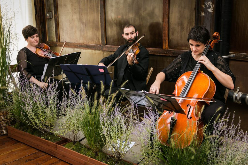 Three musicians playing at a Brooklyn Winery wedding