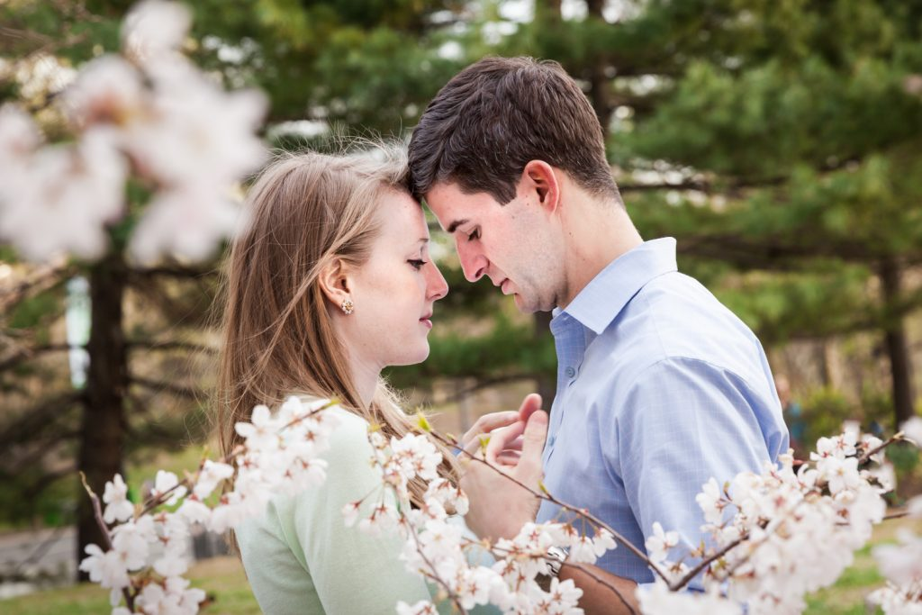 Couple touching foreheads  in front of cherry blossom trees in Central Park