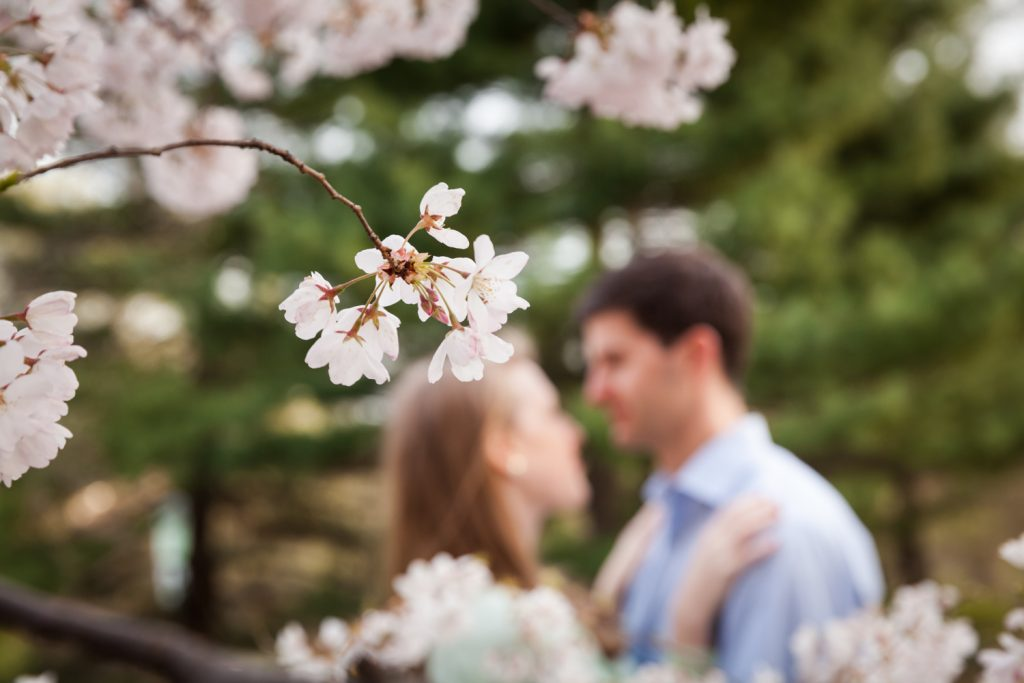 Cherry blossom trees in bloom with couple in background