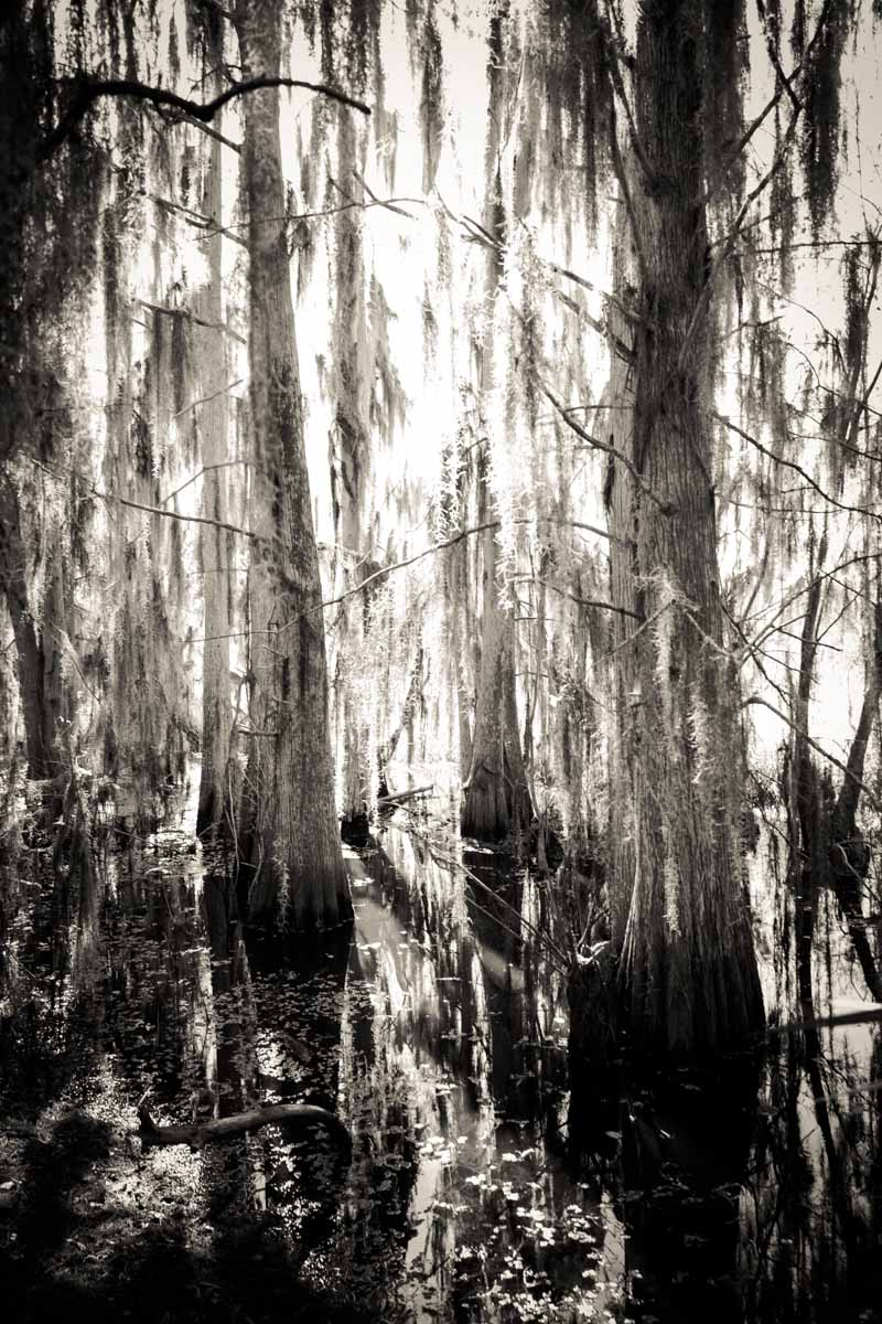 Trees in the swamp at Circle B Bar Reserve