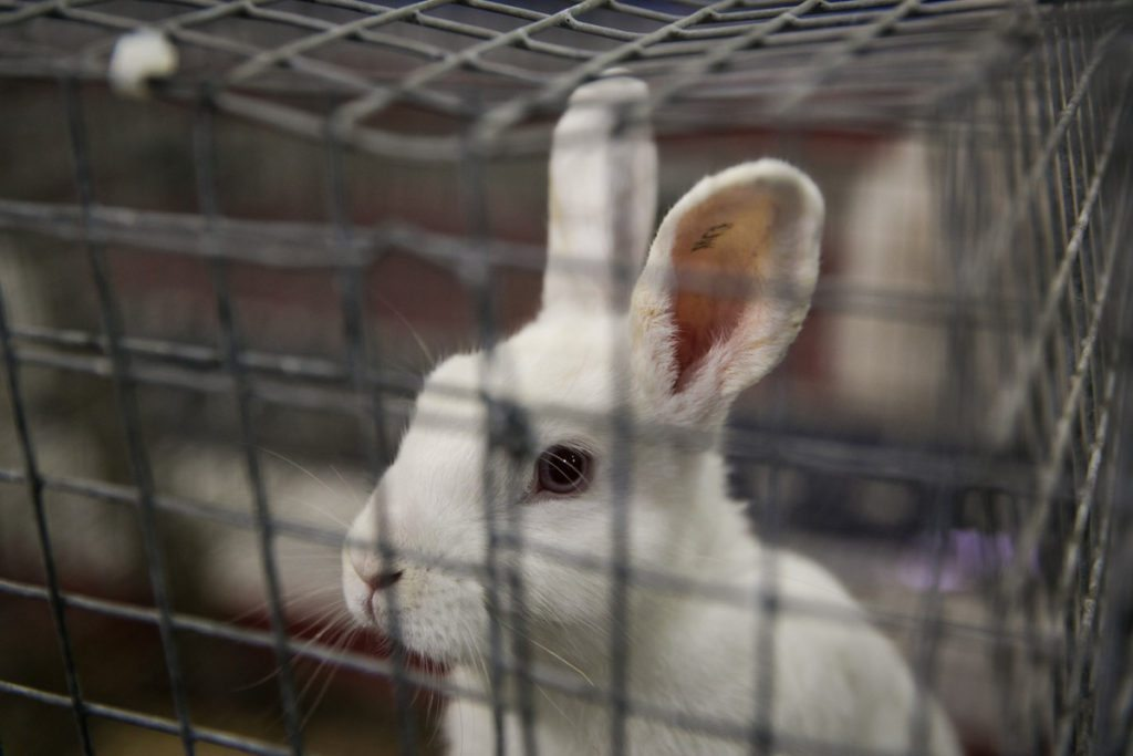 Rabbits at the Florida State Fair, photographed by NYC photojournalist, Kelly Williams