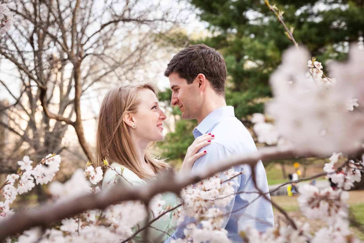 View through cherry blossom branches of couple hugging in Central Park
