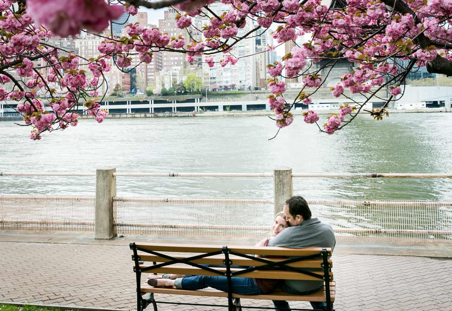Couple laying on bench underneath cherry blossom trees on Roosevelt Island