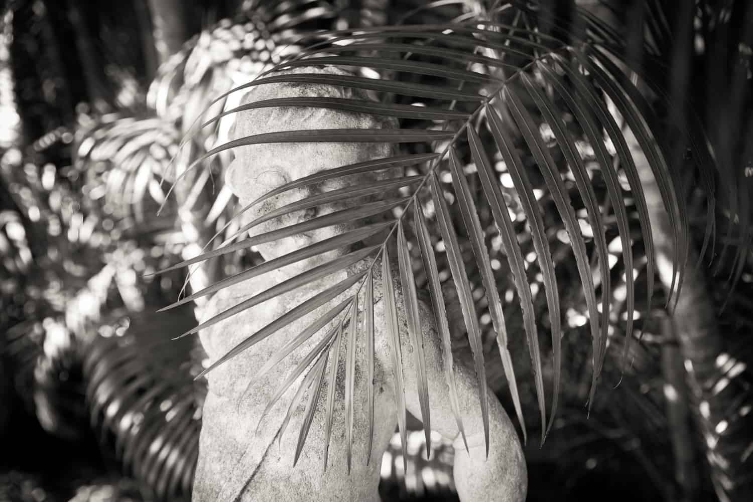 Black and white photo of statue behind palm leaf in Ca d'Zan garden in Sarasota