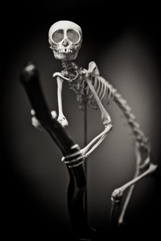 Monkey skeleton portrait, by NYC photographer, Kelly Williams