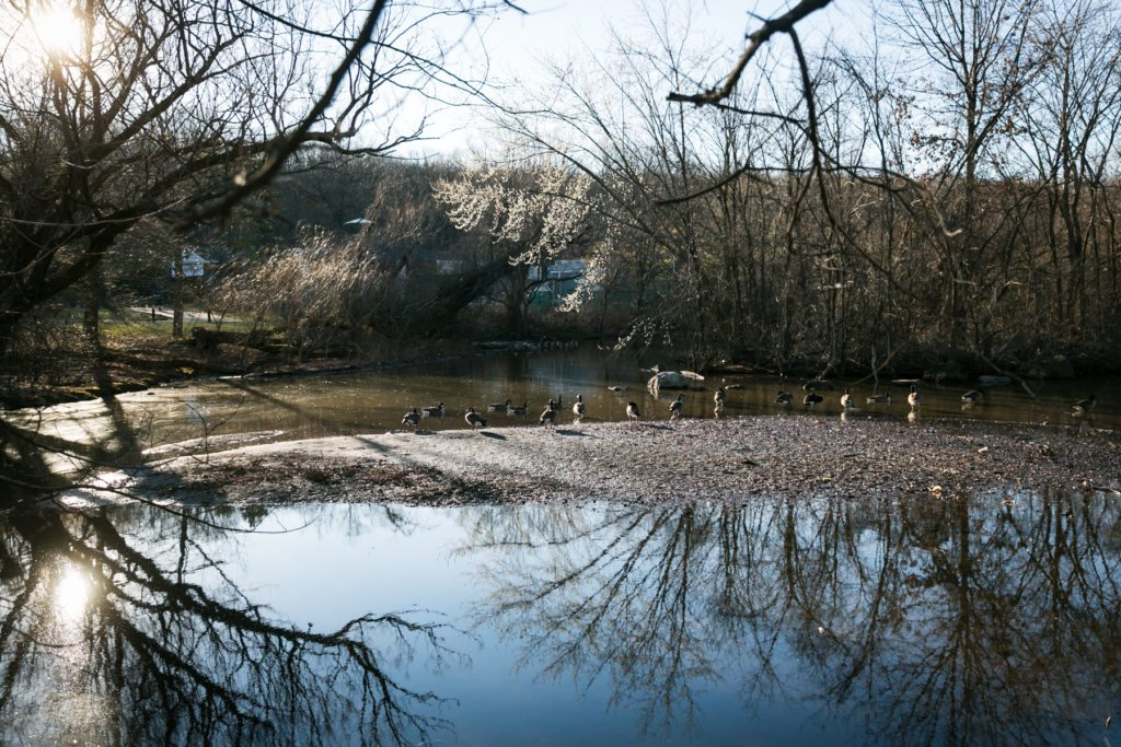 Clove Lakes Park in Staten Island, by NYC photographer, Kelly Williams