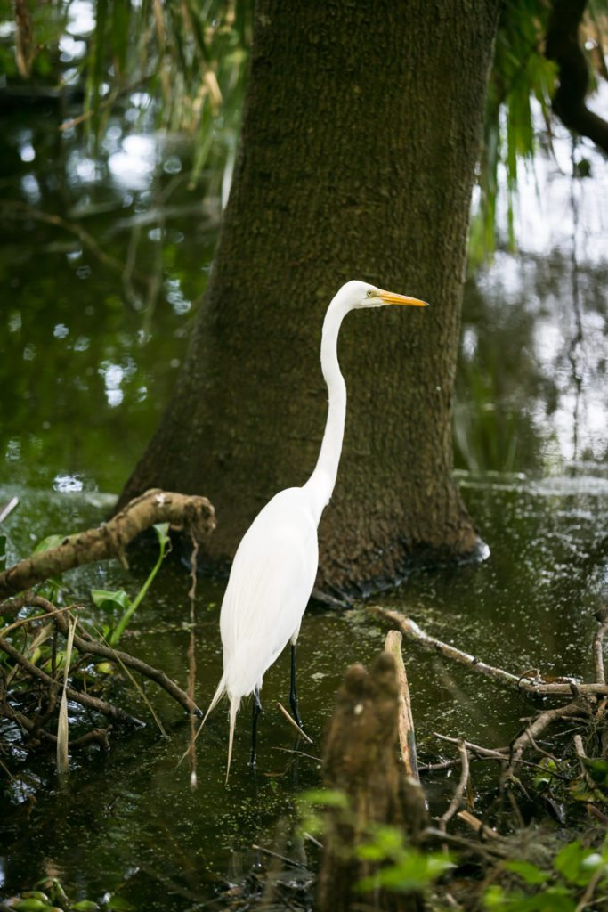 Heron at the Circle B Bar Reserve by NYC photographer, Kelly Williams