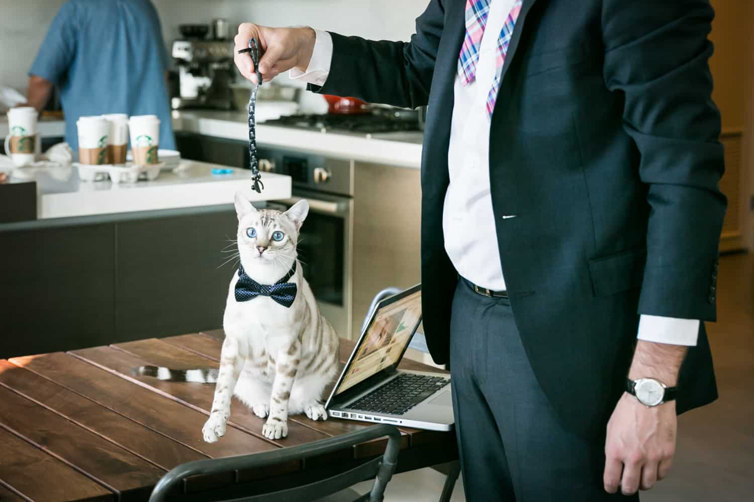 Cat wearing bowtie for an article on tips for including your pet in your wedding