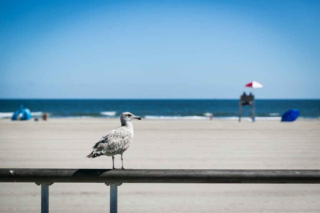Seagull on railing in Far Rockaway