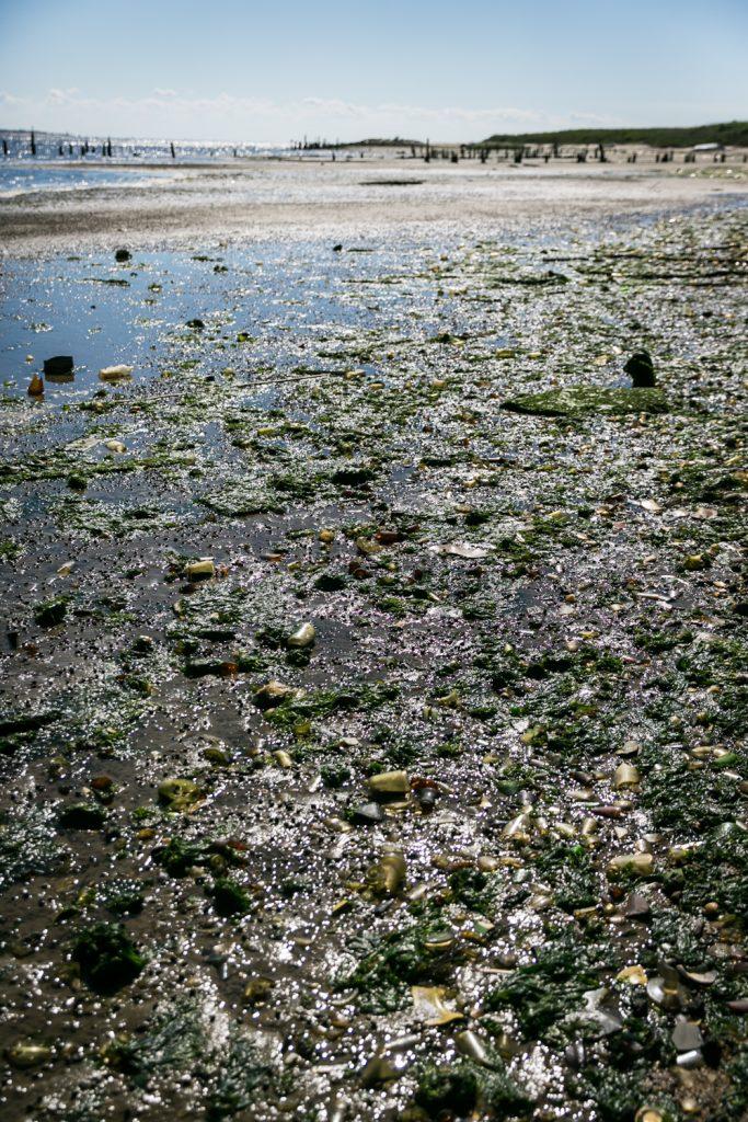 Dead Horse Bay photos of trash and beach