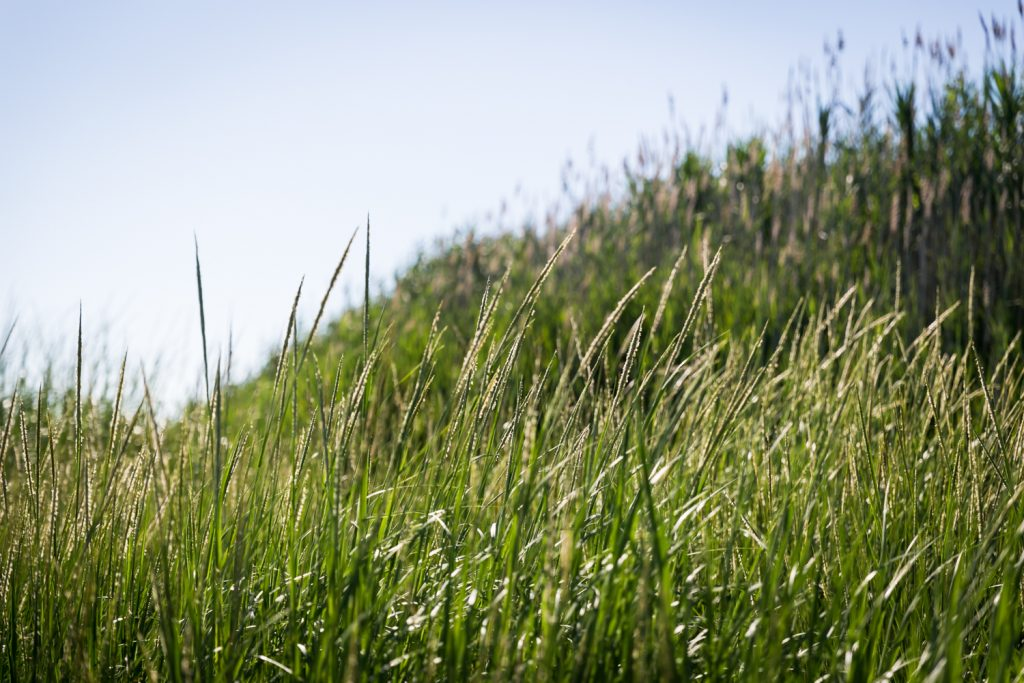 Dead Horse Bay photos of grass on hill