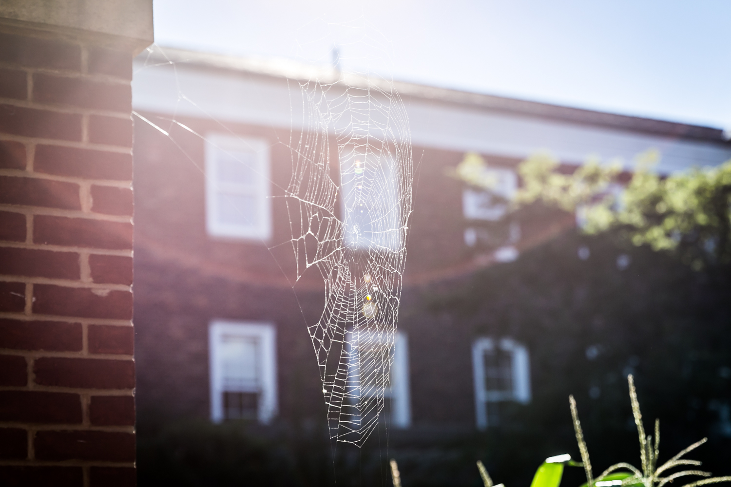 Cobweb with sunlight