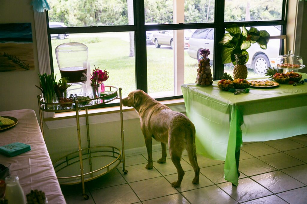Dog looking out window at a Florida bridal shower