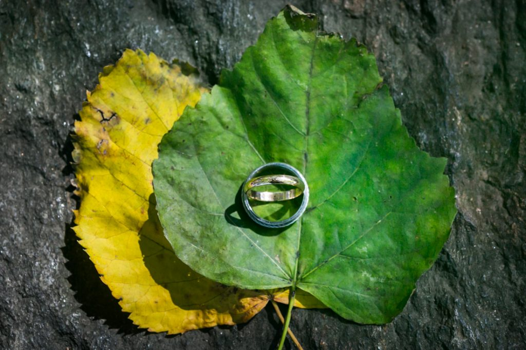 Wedding rings on green and yellow leaves