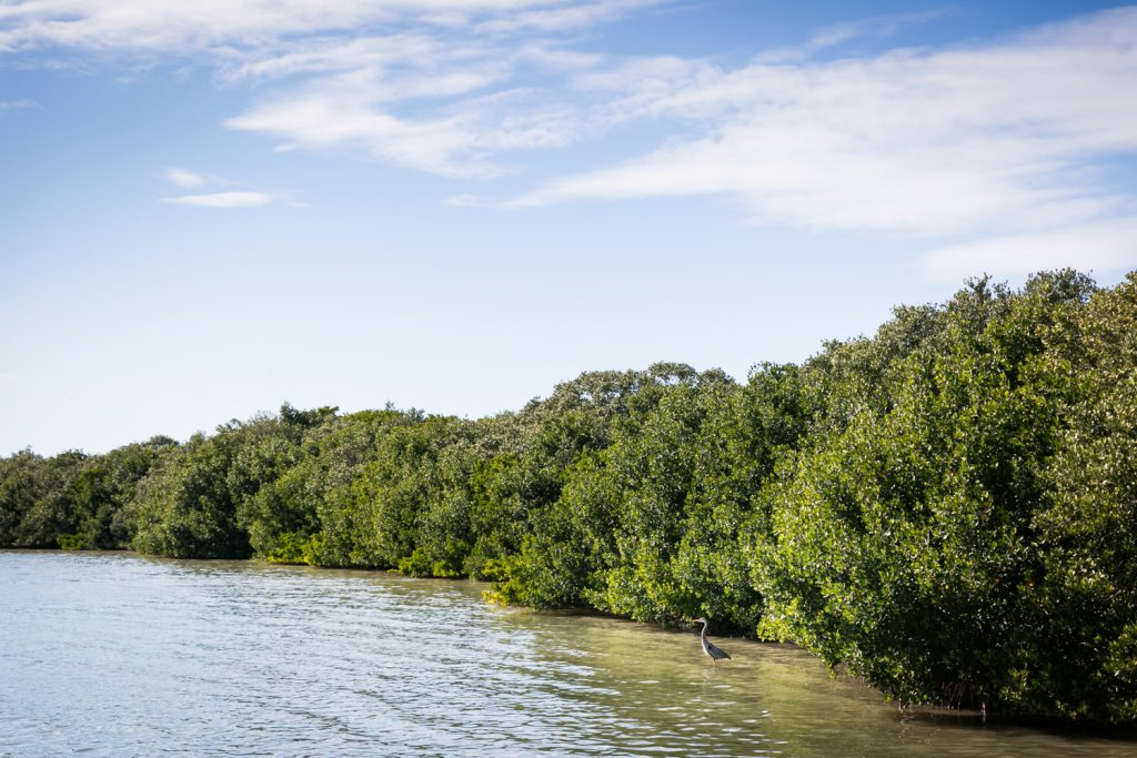 Heron at edge of Caladesi Island for article on Honeymoon Island photos