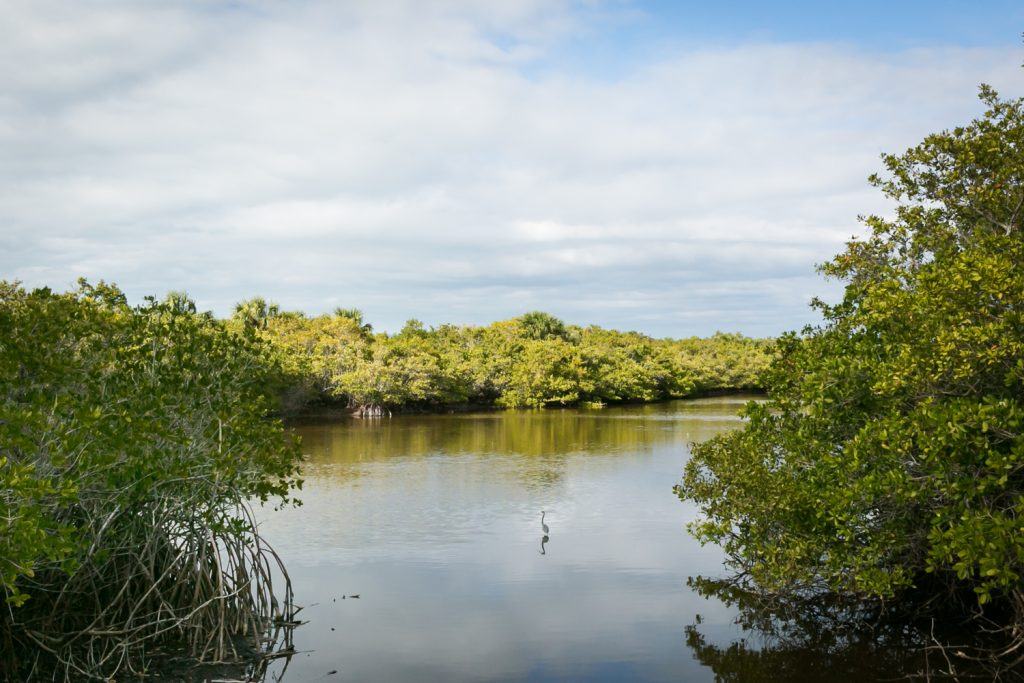 Heron in middle of water inlet for article on Honeymoon Island photos