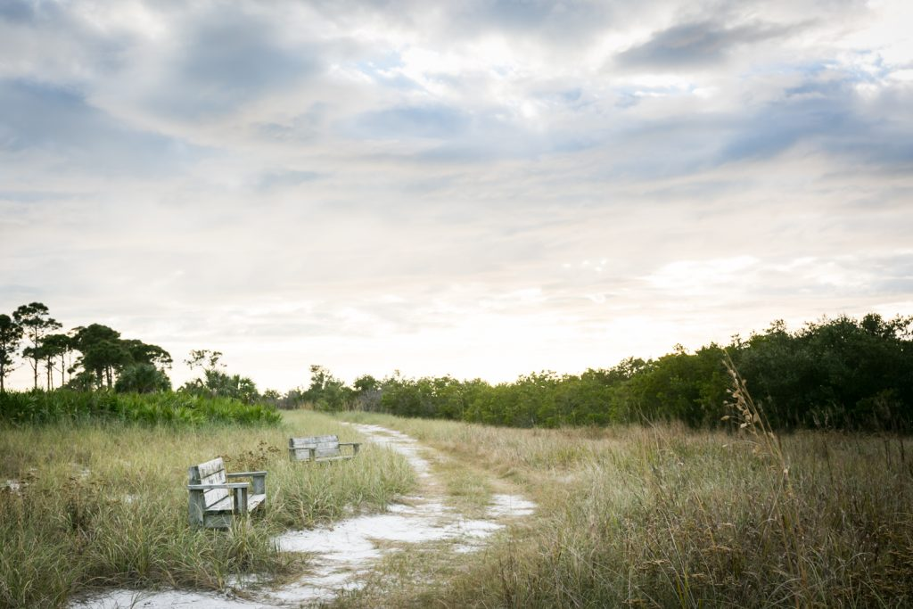 Benches beside path through park for article on Honeymoon Island photos