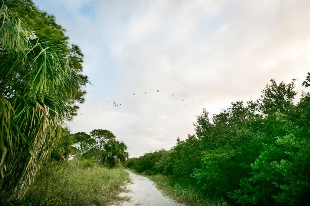 Pathway through Honeymoon Island with birds flying overhead