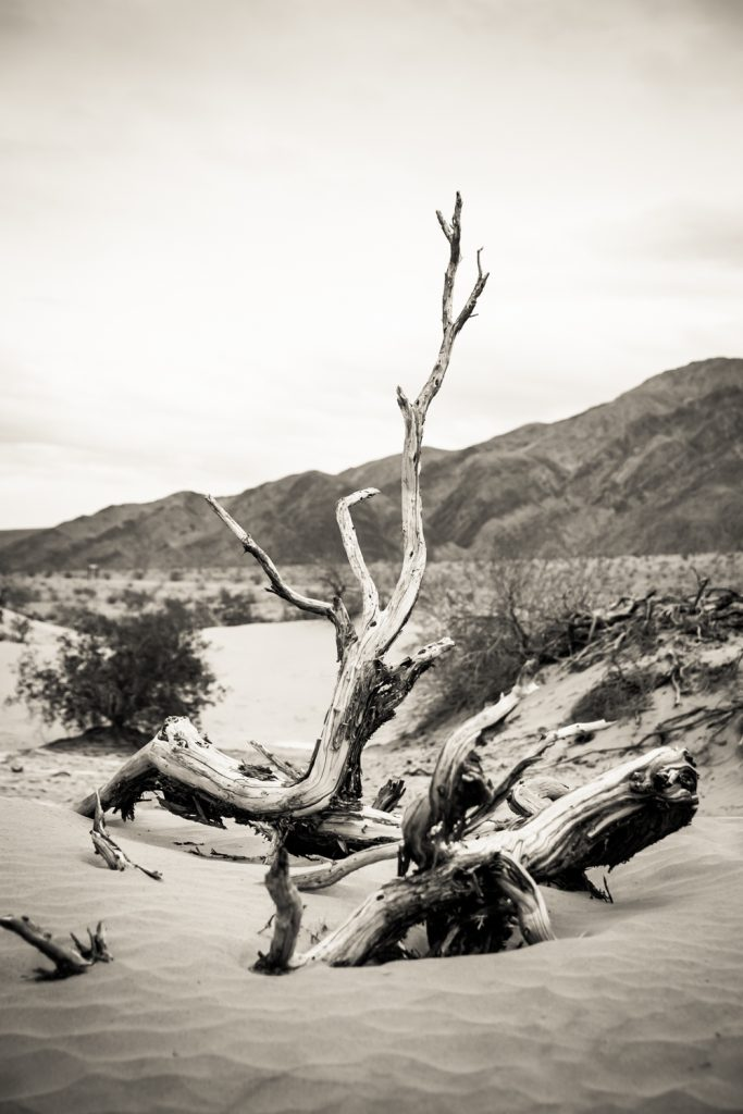 Black and white photo of branch in sand dune in Death Valley National Park