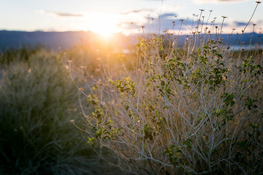 Sunrise shining through desert plants near Lake Mojave
