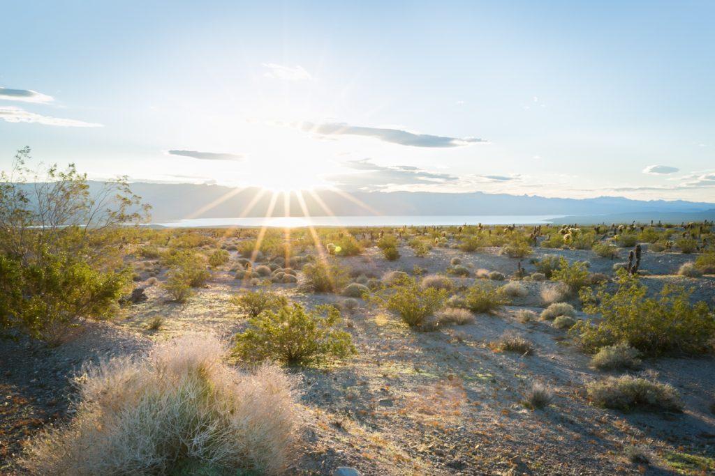 Sun rays across desert landscape in Mojave National Preserve