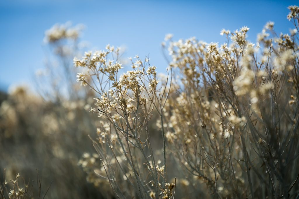 Close up on desert flowers in Mojave National Preserve