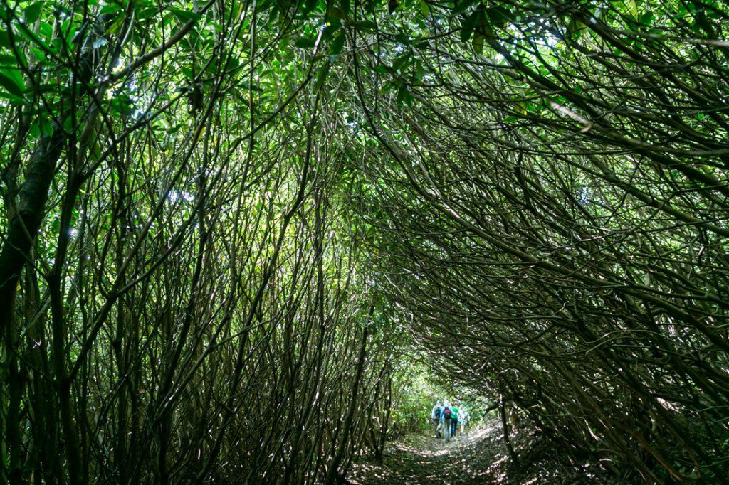 Hiking trail by North Carolina photographer, Kelly Williams