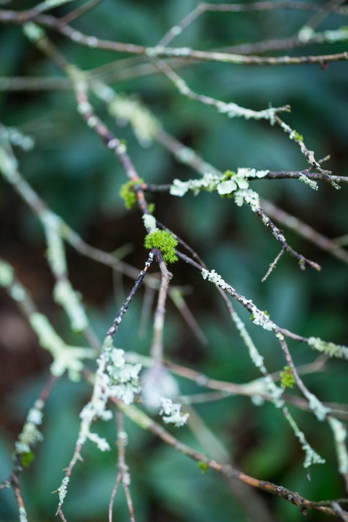 Moss by North Carolina photographer, Kelly Williams