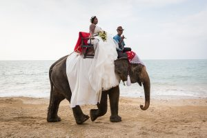 Bride on elephant for an article on destination wedding photography tips