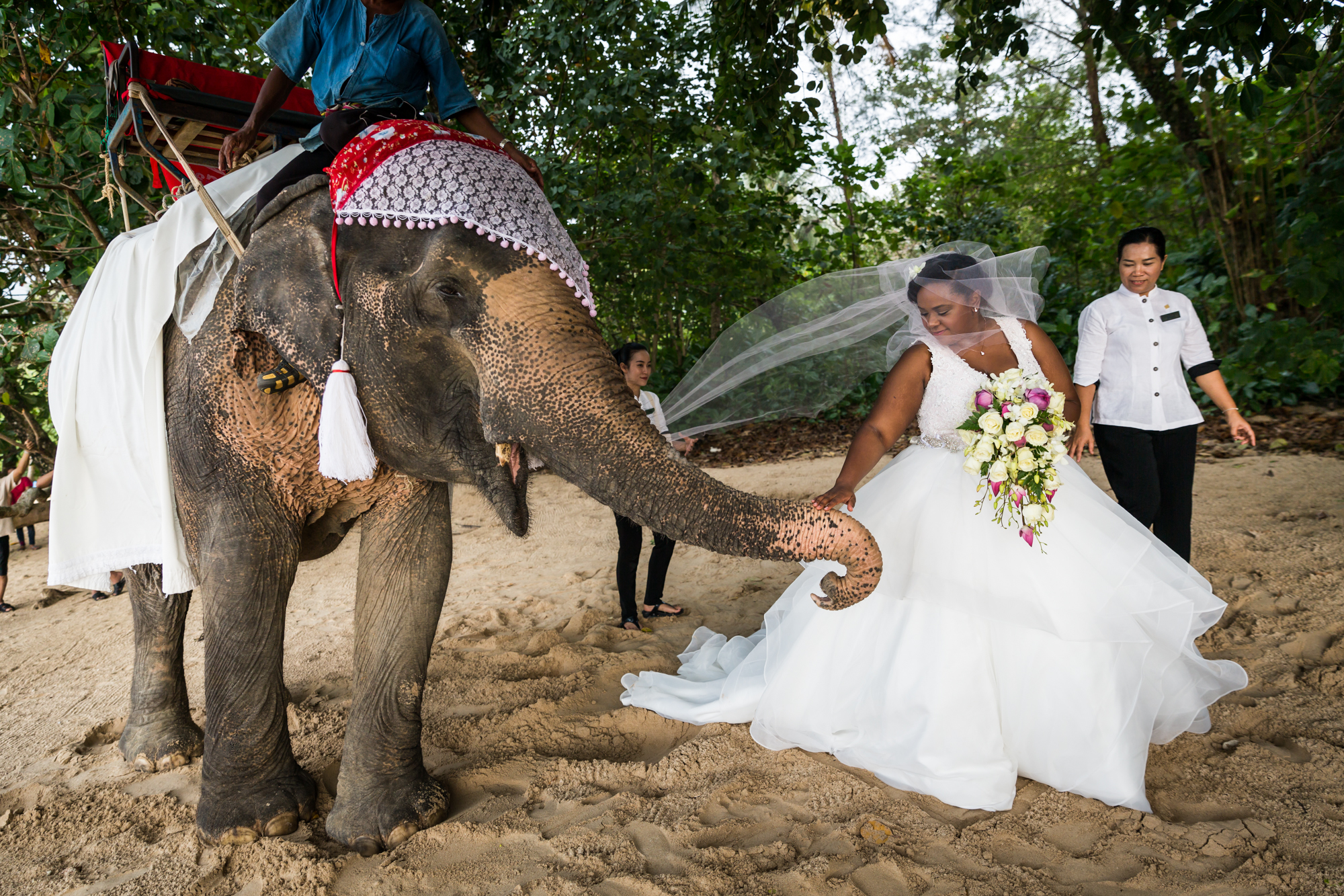 Bride with elephant for an article on destination wedding planning tips