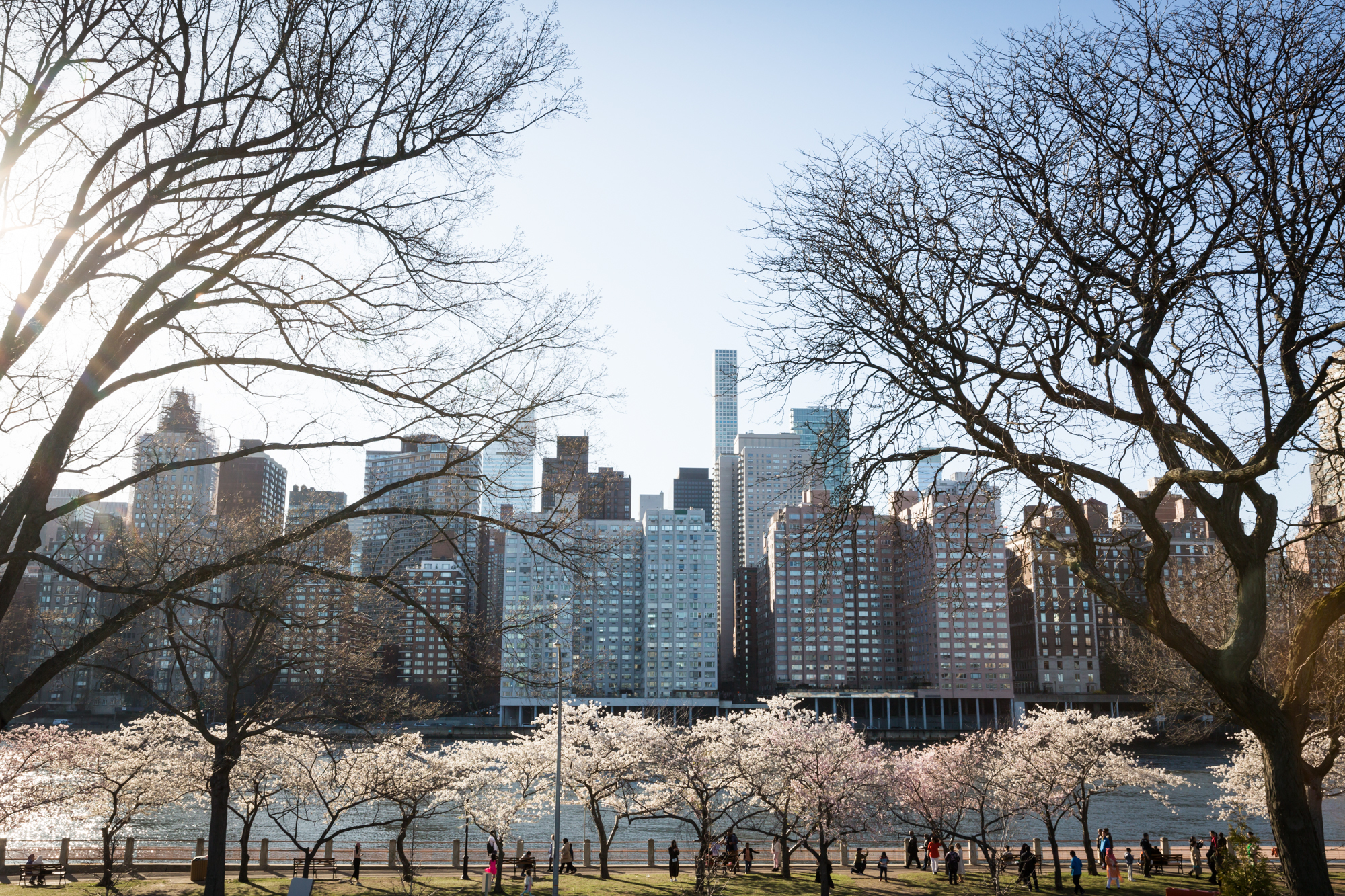 Roosevelt Island for an article on cherry blossom photo tips