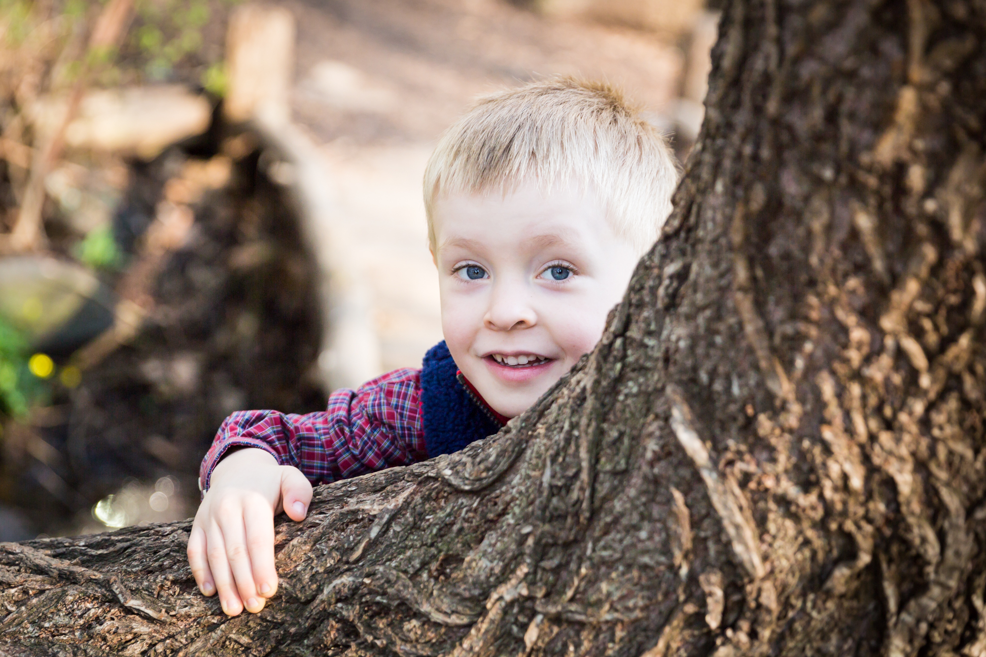 Child in tree for an article on the best family portrait poses
