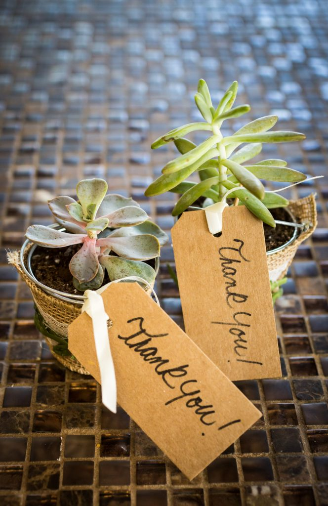 Two small metal containers with succulents for guest favors