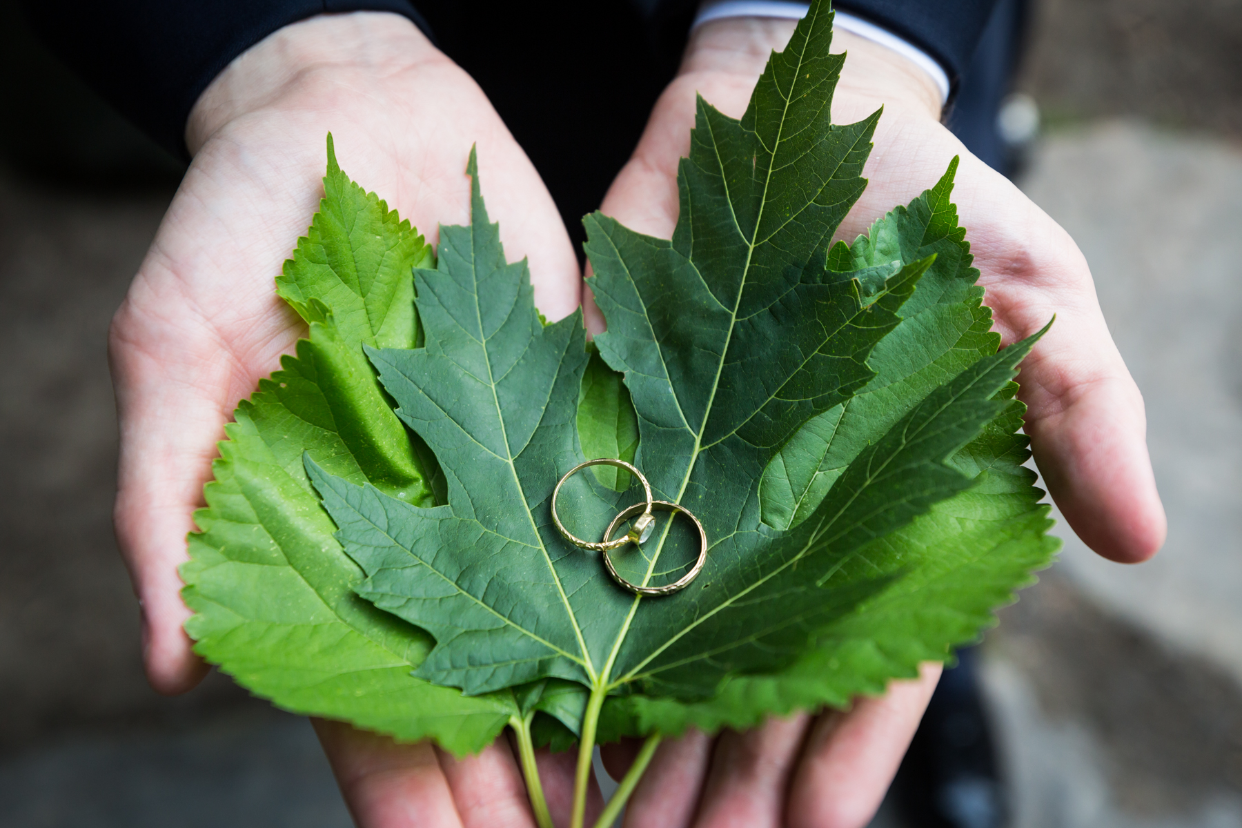 Wedding rings on leaves for an article entitled, 'Do you need a permit to get married in Central Park?'