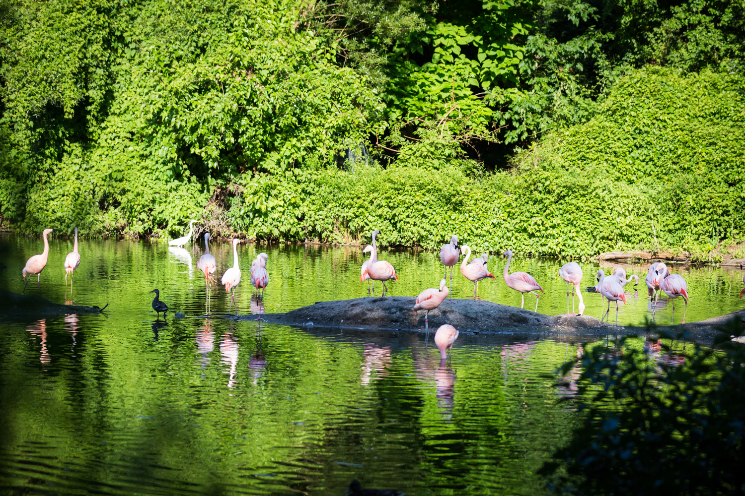 Flamingos in pond for an article on Bronx Zoo wedding venue updates