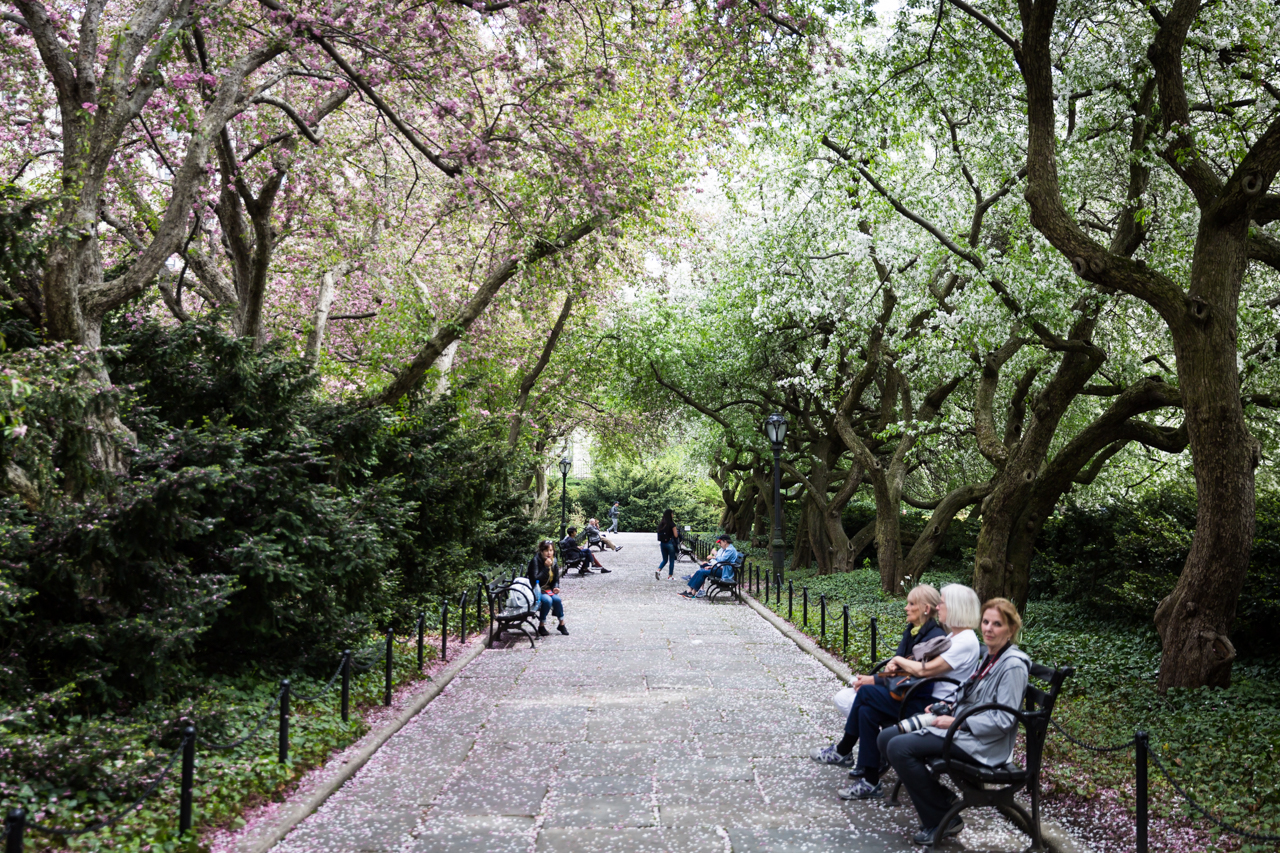 Tree-covered walkways at a Central Park Conservatory Garden wedding