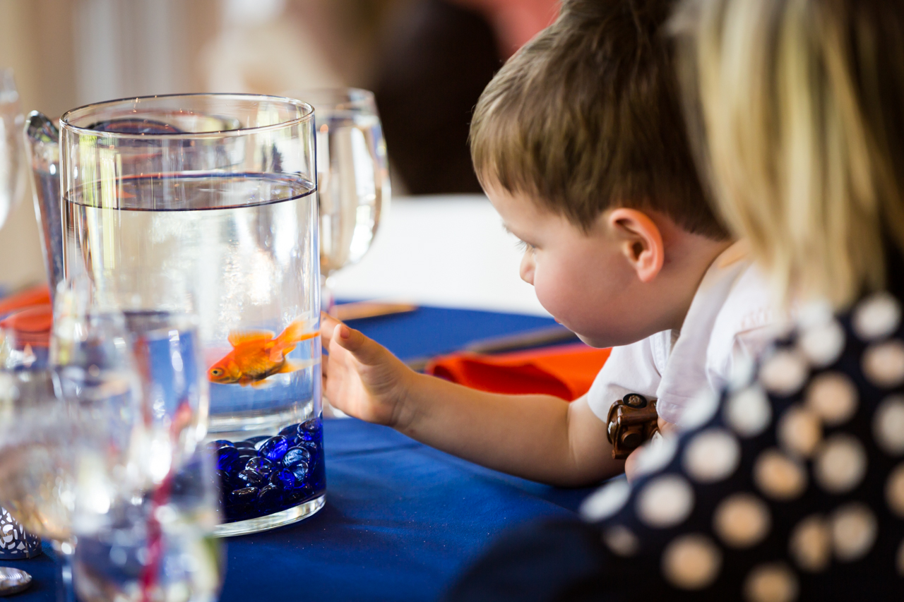 Child looking at fishbowl centerpiece Here are a few more non-floral centerpiece ideas:
