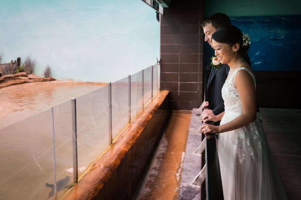Bride and groom watching penguin swim at the Bronx Zoo Aquatic Bird House