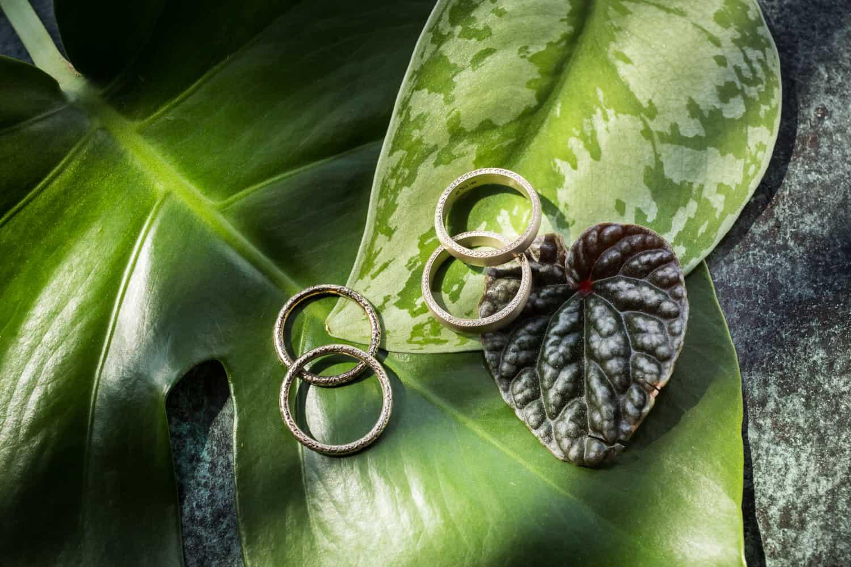 Pair of wedding rings resting on green leaves