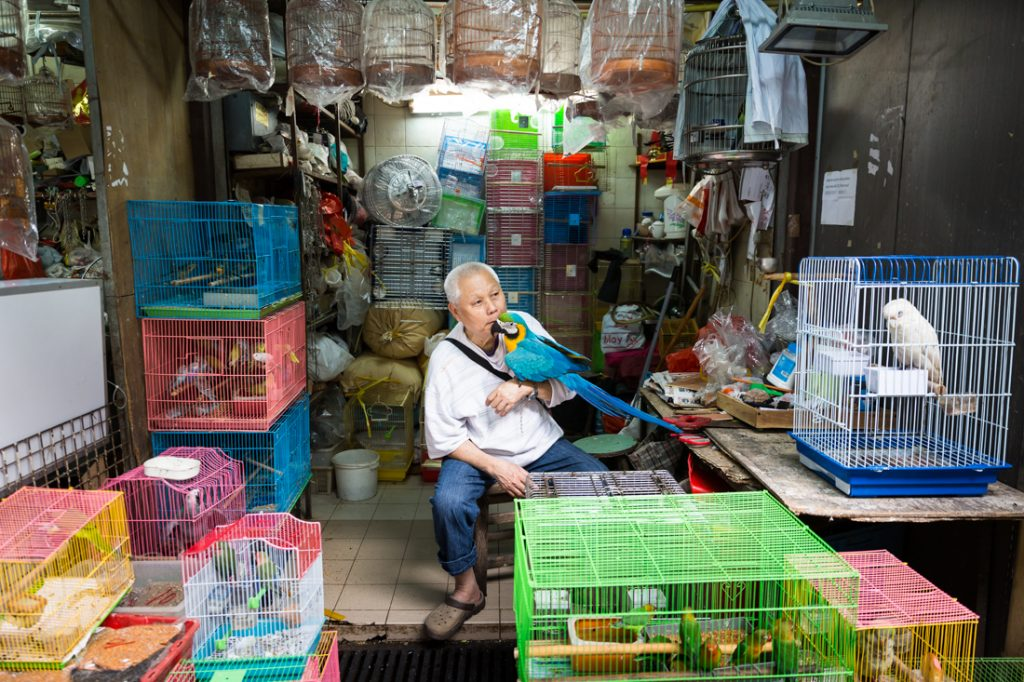 Man kissing a parrot at the Bird Market in Hong Kong