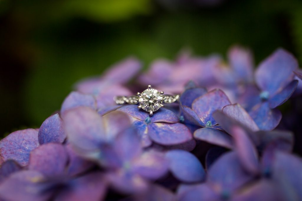 Close up of diamond engagement ring on purple hydrangea flowers