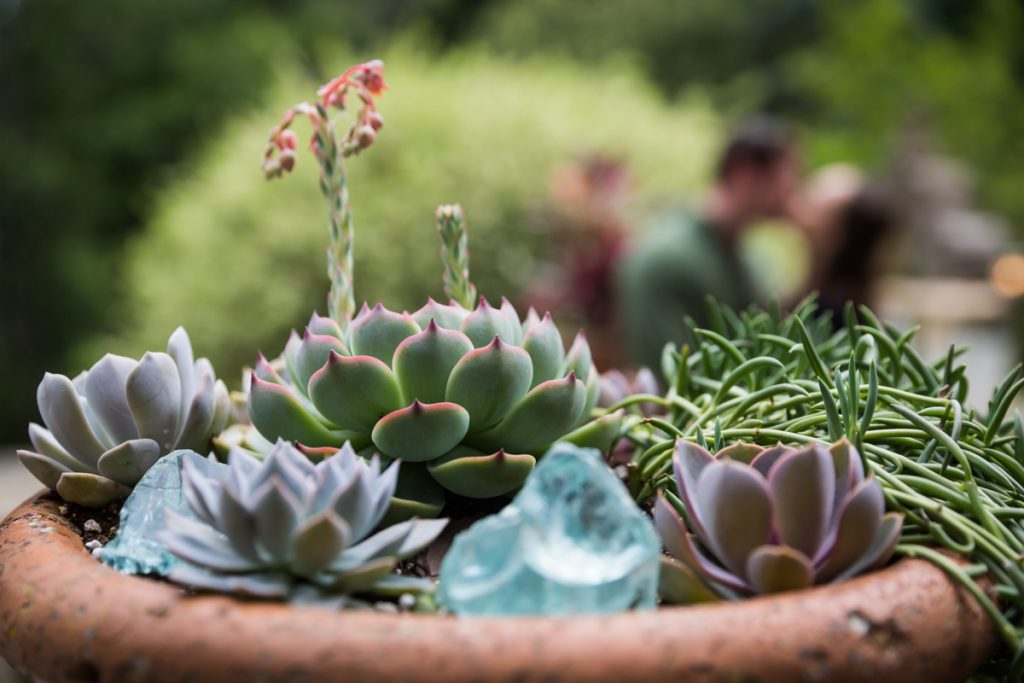 Planter filled with succulents with kissing couple in background