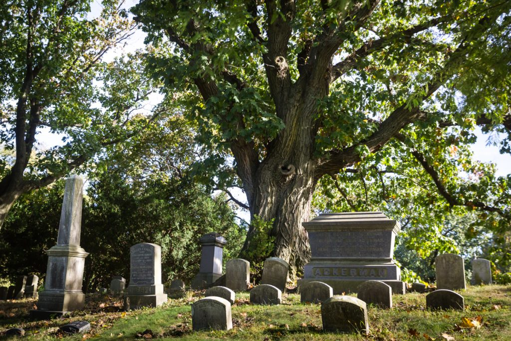 Graves under a tree at Green-Wood Cemetery