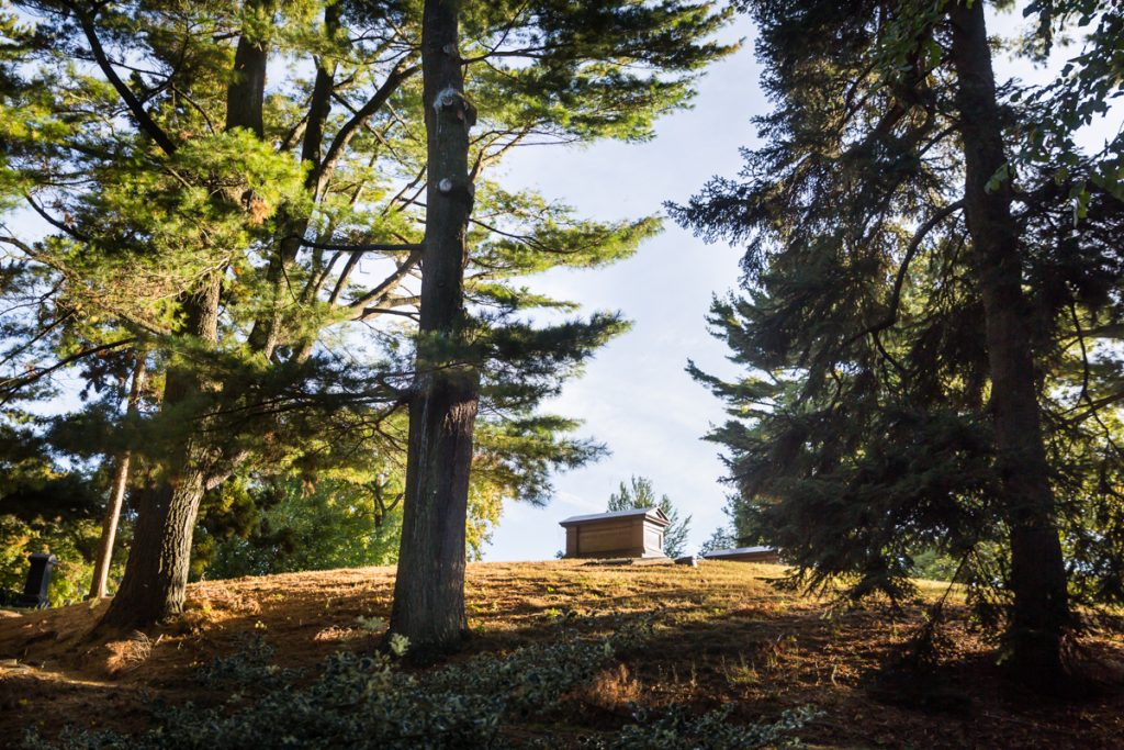 Grave on hill surrounded by trees at Green-Wood Cemetery