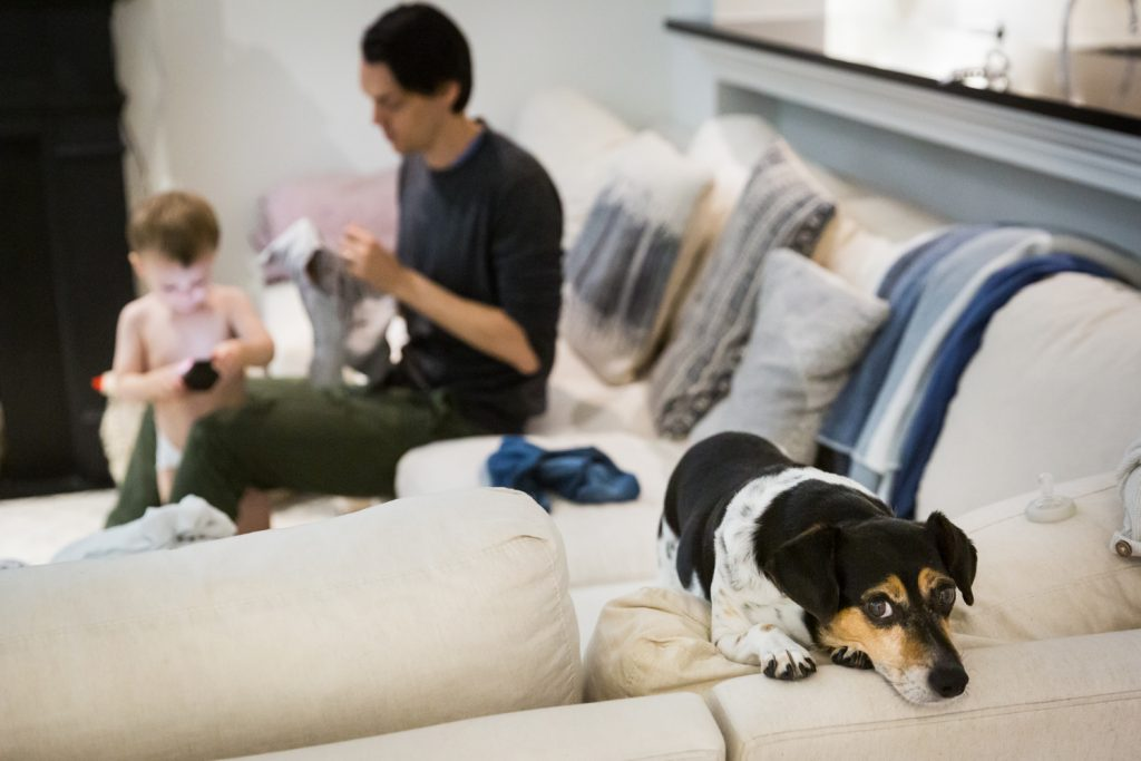 Dog on couch with father and little boy in background